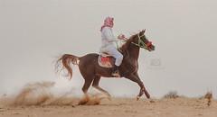 #خيل #عربي #سباق #الفروسية #القصيم #بريدة #الشماسية #عنيزة #الرياض  #غرد_بصورة (Ayman AL - habib) Tags: عربي الرياض سباق خيل القصيم عنيزة الفروسية الشماسية بريدة غردبصورة