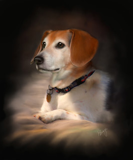 Lily the Beagle