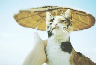Conical Hat Cat