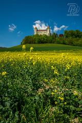 _DSC0859 (DDPhotographie) Tags: jaune suisse chateau ch vd colza champvent
