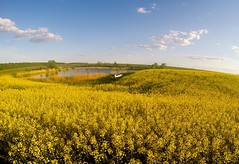 Yellow And Blue Ukraine (naum_23) Tags: sky nature ukraine mostlysunny