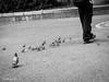 El Sr. de los pajaritos... Ueno Park (Gabriela Nakayoshi) Tags: street japan canon photography ueno mark2 poweshot g1x
