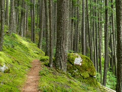 Forest Walk (Ramona H) Tags: forest woods hiking path walk northcascades diablolaketrail
