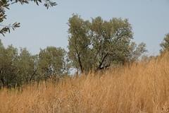 DSC_0098 (chaudron001) Tags: turquie xanthos favoris lieu
