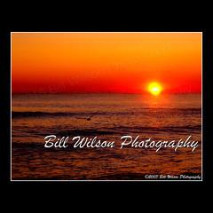 Sunrise Gull (wildlifephotonj) Tags: ocean seagulls sunrise newjersey seagull gull gulls nj sunrises beachsunrise beachphotos newjerseybeaches sunrisenj sunrisenewjersey seagullbeachnj