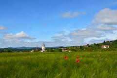 Le village derrire les bls (Croc'odile67) Tags: sky cloud nature landscape nikon ciel poppies nuage paysage coquelicots d3200 pavots afsdx18105