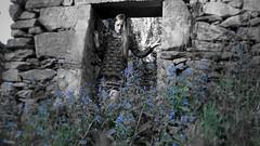 126/366: spring is for lovers (Andrea  Alonso) Tags: naturaleza house selfportrait flores primavera me nature casa spring ruins yo galicia ruinas 365 autorretrato vigo selective 366 selectivo