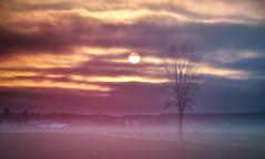 Sunrise & Tree (D-TaiL) Tags: morning sky sun tree nature sunrise landscape nikon d7000 dtailvision