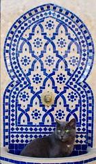 moroccan kitty (Bruna Leticia Pinheiro) Tags: cat tile ceramic kitty marocco marrocos