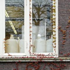 Nature taking over (Erik Schepers) Tags: windows plants plant holland nature netherlands wall garden botanical lab bottles over experiment delft laboratory growing tuin taking tu reflexion raam flasks botanische groeien muurklimmer