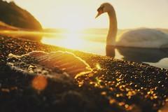 It took my breath away (siew_wei) Tags: travel winter sun lake japan sunrise golden natural mountfuji swam lakekawaguchiko