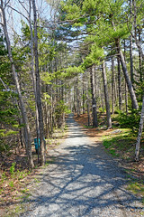 NS-00327 - Groomed Path (archer10 (Dennis) (74M Views)) Tags: park canada novascotia path sony dingle free hike trail dennis jarvis iamcanadian mirrorless dinglepark freepicture 1650mm dennisjarvis a6300 sirflemmingpark archer10 dennisgjarvis ilce6300