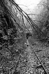 The end of track (Tiefengeist) Tags: kodak tmax 14 delta nikonf100 400 24mm ilford ilforddelta400 kodaktmax 8exdgmakro kodaktmaxdeveloper14 sigma24mmf1