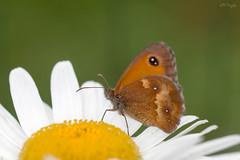 Mariposa. (rober.trujillo) Tags: mariposa butterfly macrofotografia macro canon70d canon tamronsp90mmf28divcusd