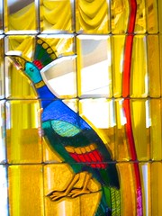 IMG_0790 (shawnzrossi) Tags: graceland memphis tennessee peacock stainedglass