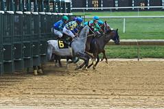 1st Race at Delaware Park (susanmbarlow) Tags: delawarepark equus horse thoroughbred startinggate racetrack delparkracing equidae racehorse equine delaware photograph equinephotography thoroughbredracing horseracing horserace