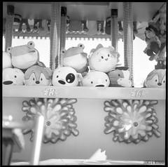 Plush (James Mundie) Tags: jamesmundie jamesgmundie profjasmundie jimmundie mundie copyright©jamesgmundieallrightsreserved copyrightprotected blackandwhite blancetnoir noir black monochrome monochromatic bw blancoynegro biancoenero schwarzweis mediumformat squareformat 120mm 120film 6x6 film analog yashicaa tlr twinlensreflex mittelformat palaceplaylandamusementpark old orchard beach oldorchardme maine downeast