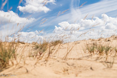 Kootwijkerzand (M van Oosterhout) Tags: kootwijkerzand kootwijk veluwe holland nederland netherlands duch desert woestijn zand landschap landscape nature natuur wolken clouds