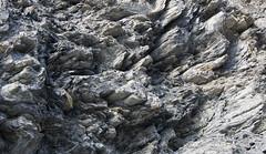 platy, sideways (khasut) Tags: denalinationalpark horseshoelake metamorphism schist slatycleavage