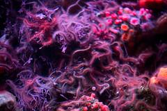 BI6A0447 (emilie raguso) Tags: california family vacation aquarium monterey december pacific montereyaquarium 2014 2015 december2014