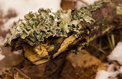 img_1857.jpg (ronnymariano) Tags: ny newyork tree nature moss hike lichen rocklandcounty 2015 harrimanstatepark harrimanpark