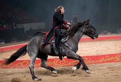 MaCeo Arcobatic Equestrian Experience