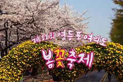 Seoul: Yeouido Spring Flower Festival (Seoul Korea) Tags: city festival asian photo spring asia korea korean photograph seoul cherryblossom southkorea hanriver  yeouido  kpop  canoneos6d flickrseoul