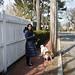 Mizuka walking the dogs