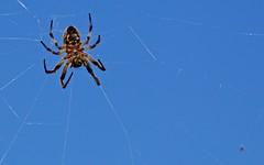 Araignée - IMG_0437 (6franc6) Tags: canon 13 avril insecte camargue bouchesdurhône réserve pontdegau 6franc6 eos70d ef100400f4556lisiiusm 2015insecte