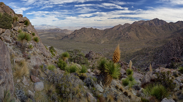 #WOMENINSTEM WEDNESDAY - #CONSERVATIONLANDS15 STYLE: Kingston Range Wilderness, California, by Bob Wick
