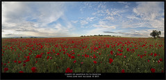"Campo de amapolas en La Mancha • <a style=""font-size:0.8em;"" href=""http://www.flickr.com/photos/15452905@N02/17313852771/"" target=""_blank"">View on Flickr</a>"