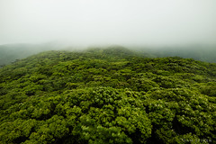 Forest covered by cloud, Amami Oshima, Japan (SamKent22) Tags: trees green nature beautiful japan clouds forest landscape outdoors japanese countryside woods moody view kagoshima southern greenery lush japon giappone atmospheric amamioshima