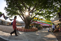 2016 Buddha's Birthday (DMac 5D Mark II) Tags: people festival ancient asia photographer buddha buddhist traditional pray ceremony culture photojournalism celebration tradition southkorea jeju cultural photojournalist jejuisland douglasmacdonald thejejuweekly 2016buddhasbirthday