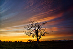 Warm Up, Cool Down (Matt Molloy) Tags: sunset sky ontario canada tree nature field vertical clouds landscape fun photography timelapse bath branches colourful slices lovelife mattmolloy timeslice