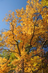 2015 Fall Colors 5 (DrLensCap) Tags: chicago fall robert colors illinois woods il kramer caldwell