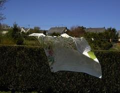 Windy Day (edeltraudewert) Tags: windig