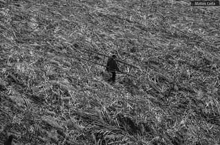 A Farmer.