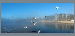 Blue mist (galinaderusia) Tags: blue sea sky seagulls mist water outdoor shore gaviotas gulfoffinland