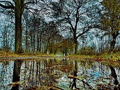Atumn mirror (Firefly Ju) Tags: tree mirror atumn