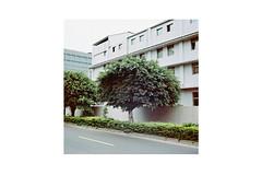TPE-6 (monochrom-fotoart) Tags: street house tree 120 6x6 film analog square factory kodak taiwan negative medium format taipei analogue monochrom   88 kiev farbe portra baum danilo kiev88 negativ taipeih quadrat mittelformat strase bittorf kodakportra160  newtaipeicity