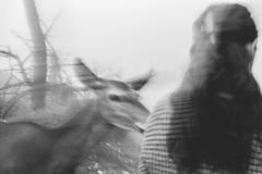 (ioannabo) Tags: shadow blackandwhite woman black fog deer greece pure parnitha