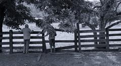 (victorcamilo) Tags: brazil people bw brasil photoshop canon photo pessoa flickr place farm ngc photojournalism pb human momento cerca moment fotografia humano pretoebranco lugar fazenda nationalgeographic fotojornalismo curral goias conversa canonlens peopleoftheworld ipameri lugaresdobrasil lugaresdomundo victorcamilo victorcamio