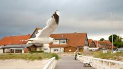 Hohwacht 03 (dlwotan) Tags: sea beach strand deutschland meer natur ostsee holstein hohwacht schleswig