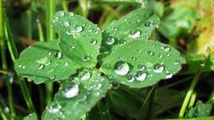 Wassertropfen (Morgentau) auf einer Pflanze (www.elbpresse.de) Tags: natur wiese regen wassertropfen tautropfen morgentau