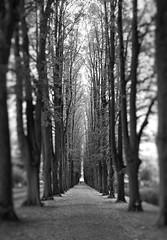 am Ende (Michael Geran) Tags: white black contrast allee baumallee