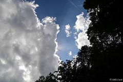 1 mois / 1 thme : Juin / Contre-jour (odilecuvit) Tags: contrejour nature ciel soleil nuages