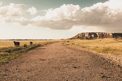 Tea Kettle Ranch (- Anthony Papa -) Tags: wyoming torrington canon 5d mk ii anthony papa plains dry hot summer grass blue mountains country middle nowhere vintage matte america tea kettle ranch horse cows cattle clouds tumblr tumbleweeds