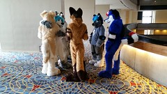 Dream Machine Photoshoot FWA 2015 - Shots by Lykanos (5) (Lykanos) Tags: furry photoshoot dreammachine fwa fwa2015 dmcostumes