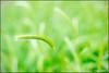 Grass Bokeh (ChristianRock) Tags: flowers nature garden georgia 50mm pentax manual manualfocus 50mmf14 rikenon 50f14 ricoh50mmf14 kmount rikenon50mmf14 k20d pentaxk20d rikenonxr50mmf14