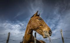 it`s good (pppkosta00) Tags: horse cavalo rede almoço arame farpado estacas equitaçao vedaçao